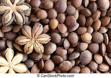 Legumes of Sacha inchi or Inca peanut. - Legumes of Sacha...