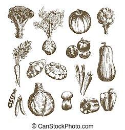 legumes, vetorial, mão, desenhado