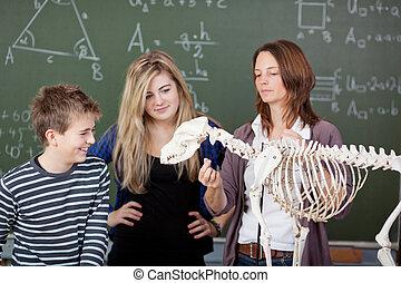 lehrer, erklären, dinosaurier skelett, zubehörteil, zu, studenten