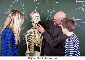 lehrer, erklären, skelett, zubehörteil, zu, studenten, in, biologieunterricht