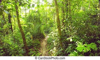 Leisurely Walk along a Tropical Rainforest Nature Trail.