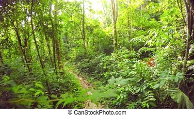 Leisurely Walk along a Tropical Rainforest Nature Trail. ...