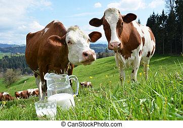 leite, emmental, suíça, região, cows.