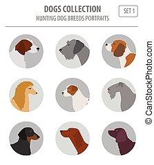 lejlighed, firmanavnet, jagt, isoleret, samling, hund, white., avler
