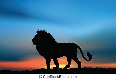 lejon, solnedgång, afrikansk