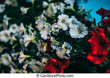 lekki, kwiaty, latarnie