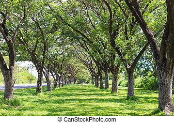 lekki, park, publiczność, drzewo, słońce