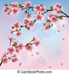 lekki, tło, z, sakura