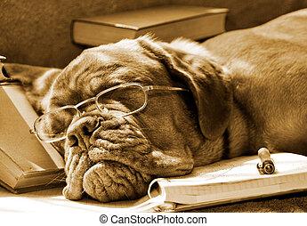 lektionen, schlafen hund, sie, muede