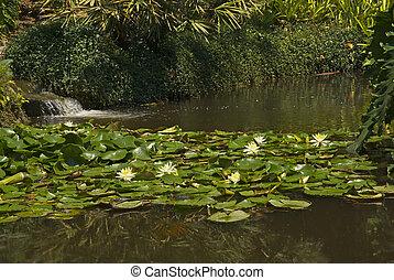 Kleine vijver waterval planten kleine waterval for Kleine tuinvijver