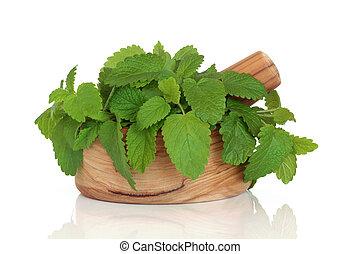 Lemon Balm Herb Leaves - Lemon balm herb leaf sprigs in an ...