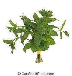 Lemon balm herb leaf posy isolated over white background.