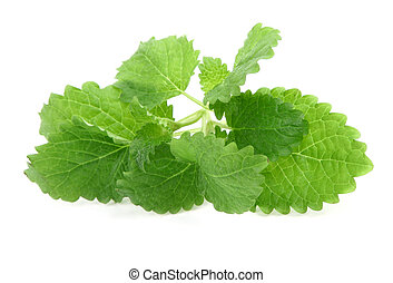 lemon balm on white background,