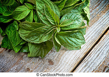 Lemon Balm - Bunch of Fresh Wet Leafs of Lemon Balm isolated...