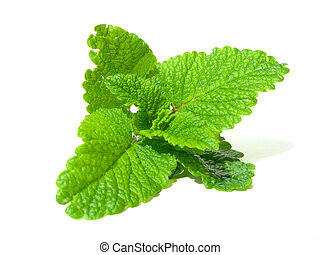 lemon balm - Fresh lemon balm