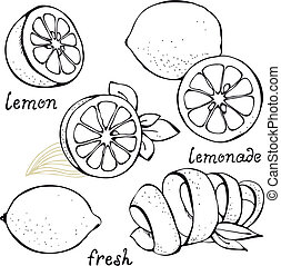 Lemon citrus vector set isolated on white