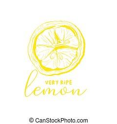Lemon drawing linear vector illustration