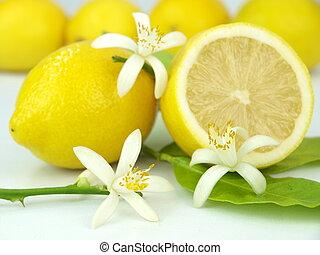 Lemon flowers and lemon fruits over white background