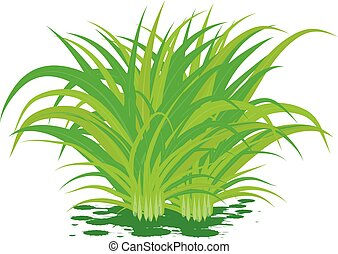 lemon grass on white background vector design