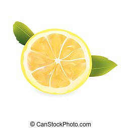 Lemon Half Slice. realistic Vector Illustration.
