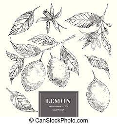 Lemon hand drawn vector illustrations set