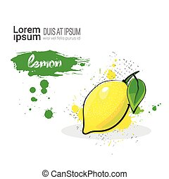 Lemon Hand Drawn Watercolor Fruit On White Background With Copy Space