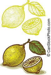 Lemon - Illustrations of lemon in retro style