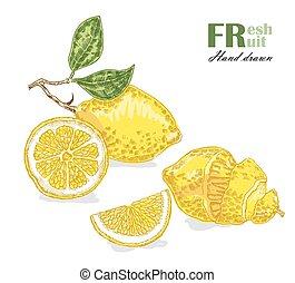 Lemon isolated on white background. Fruit vector illustration sketch