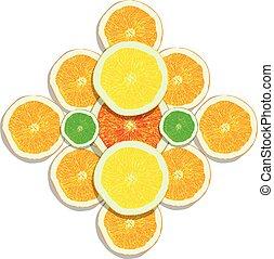 lemon, orange, lime, grapefruit slices on white background