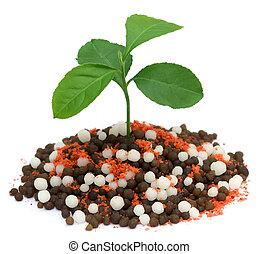 Lemon plant growing in chemical fertilizer