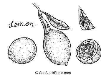Lemon set vector