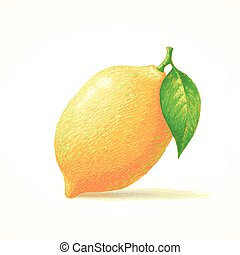 Lemon, Sketch hand drawn