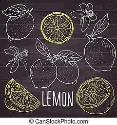 Lemon sketch set. Hand drawn doodle