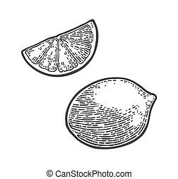 Lemon Slice and whole. Vector black vintage engraving