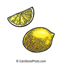 Lemon Slice and whole. Vector color vintage engraving