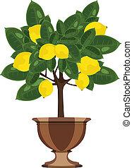 Lemon tree in a flowerpot
