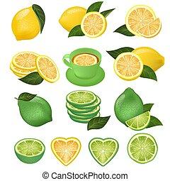 Lemon vector green lime and lemony sliced yellow citrus fruit and fresh juicy lemonade illustration natural set of citric lemon slice cut isolated on white background