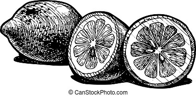 Vector illustration of a lemon stylized as engraving.