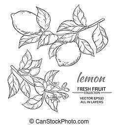 lemon vector set