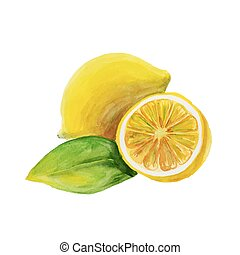 lemon. watercolor painting on white background