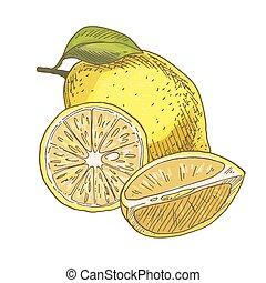 Lemon with leaf, half of the fruit.
