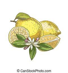 Lemon with leaf, half of the fruit, flower.