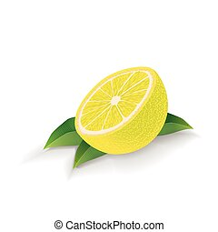 Lemon with leaves isolated on white background. Vector.