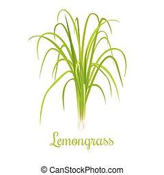 lemongrass, nebo, cymbopogon, nebo, citronella, grass.,...