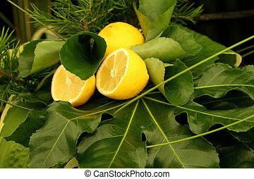 Lemons and Greenery