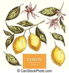 Lemons hand drawn vector illustrations pack