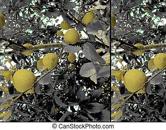 Lemons Tree Detail View Collage