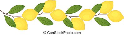lemons., vettore, limone, illustration., ramo