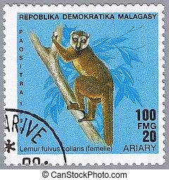 Lemur fulvus collaris