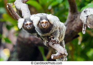 Lemur on climbing tree